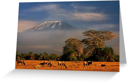 Kilimanjaro in early morning light, Amboseli National Park, Kenya, Africa. by PhotosEcosse