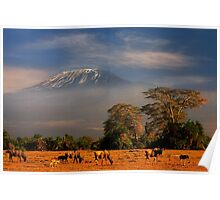Kilimanjaro in early morning light, Amboseli National Park, Kenya, Africa. Poster
