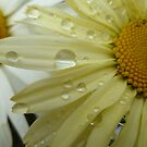 Yellow Rain Drops by Vicki Spindler (VHS Photography)