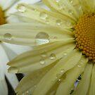 Yellow Rain Drops by Vicki Spindler (VHS Photography)