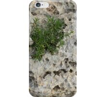 Life on Bare Rock - Pockmarked Limestone and Thyme  iPhone Case/Skin