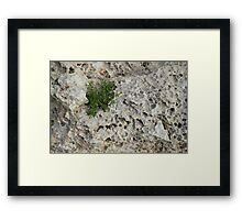 Life on Bare Rock - Pockmarked Limestone and Thyme  Framed Print