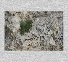 Life on Bare Rock - Pockmarked Limestone and Thyme  Kids Clothes