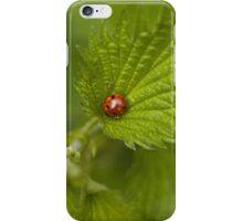 Wet Ladybug iPhone Case/Skin