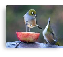 I told you to hang on tight..........! Canvas Print