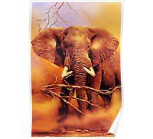 The African bush elephant (Loxodonta africana) Poster