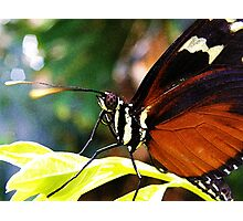 Butterfly#1 Photographic Print