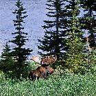 Moose by Jen Wahl