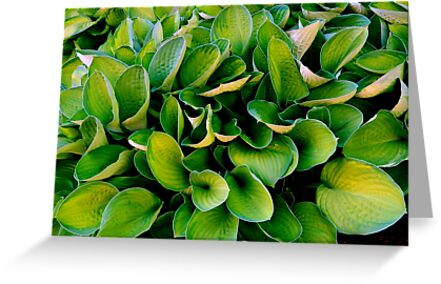 HOSTA      ^ by ctheworld