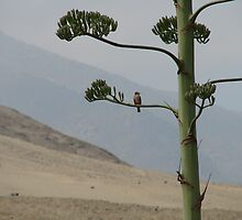 Bird in a Peruvian Tree by SierraMLatkje