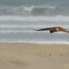 Bird of Prey above the Sea by SierraMLatkje