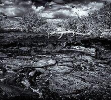 Time In Galapagos by Frank Bibbins