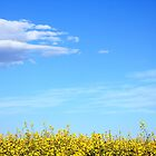 Flowers against a Summer Sky by Goerzen