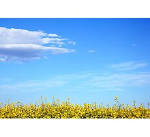 Flowers against a Summer Sky Photographic Print