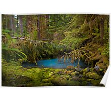 Rain Forest Pool Poster