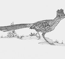 UWR Roadrunner by STEVIE KRUEGER