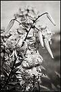 Tiger Lily - Mono by KBritt