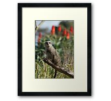 Meerkat Branch Office Framed Print