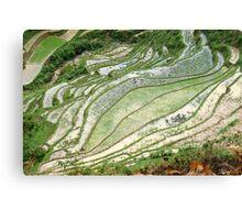 Rice Patterns Canvas Print