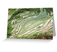 Rice Patterns Greeting Card