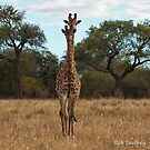 Giraffe Double by Rob  Southey