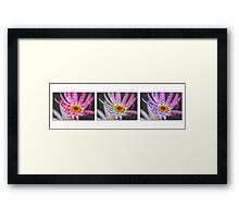 Daisy Triptych on White Framed Print