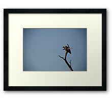 White-backed Vulture in the tree Framed Print