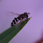 Unknown bug by Régis Charpentier