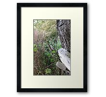 Fence and tree 1 Framed Print