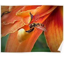 Hoverfly on Orange Poster