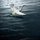 eastern great egret by carol brandt