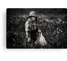 Herb Picker, Australia Canvas Print