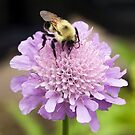 Bee on Pincushion by Kenneth Keifer