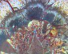 Stone Cold Turkey by Stephanie Bateman-Graham