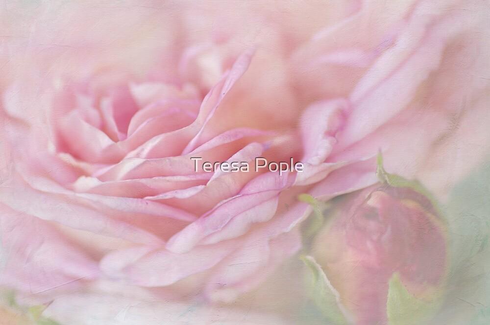 softly folded by Teresa Pople