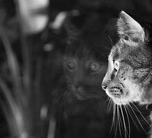 Reflecting by photogenpix