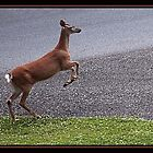 THE JUMP OFF by BOLLA67