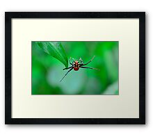 Amazing spider man Framed Print