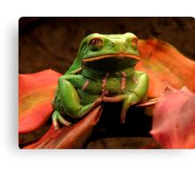 Frog Story ~ Part Two Canvas Print