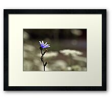 Wildflower Blue Framed Print