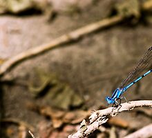 Dragonfly Blue by Eric Weiand