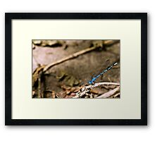 Dragonfly Blue Framed Print