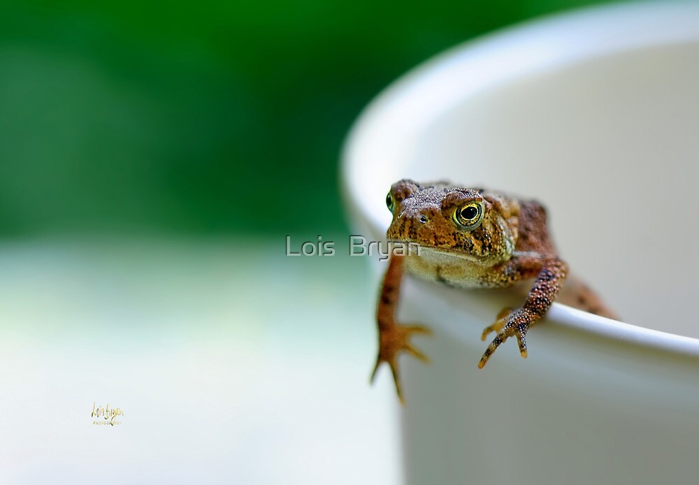 Somebody Needs Coffee by Lois  Bryan