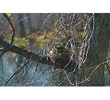 Spring Nest Photographic Print