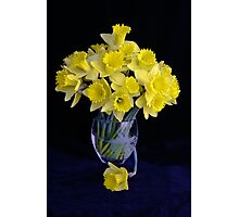 Spring Has Sprung...So I Brought It Indoors! Photographic Print