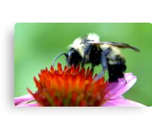 Bumble Bee on Cone Canvas Print
