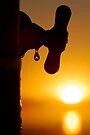 Drop of Sunshine by Leon Heyns