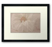 White Dahlia And Sea Shell Framed Print