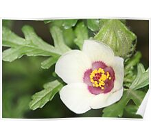 White and burgandy flower Poster