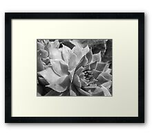Hen and Chick Framed Print